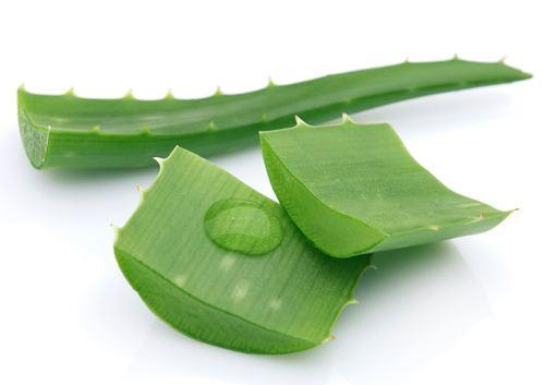Nha đam giúp bạn trị viêm lỗ chân lông hiệu quả.